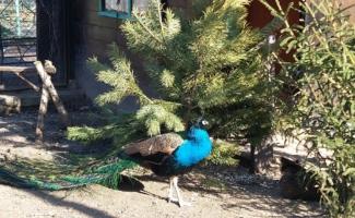 ГК «Развитие» принимает активное участие в жизни Ленинградского зоопарка